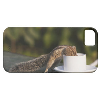 Squirrel drinking from coffee cup at Indian iPhone 5 Covers