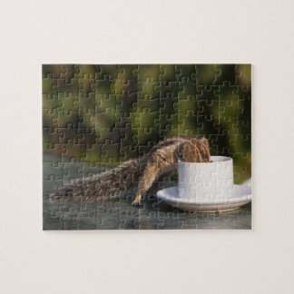 Squirrel drinking from coffee cup at Indian Jigsaw Puzzle