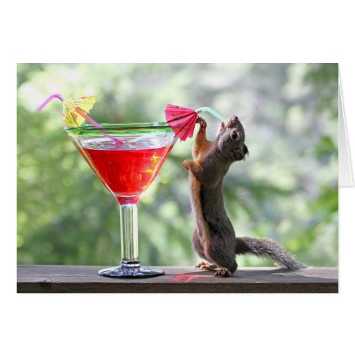 Squirrel Drinking Tropical Drink Card