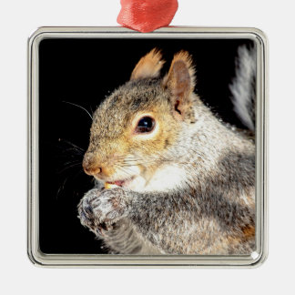 Squirrel eating a nut christmas ornament