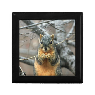 Squirrel Eating a Nut Gift Box