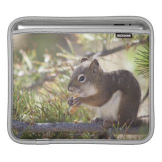 Squirrel eating a pine cone 2 iPad sleeve