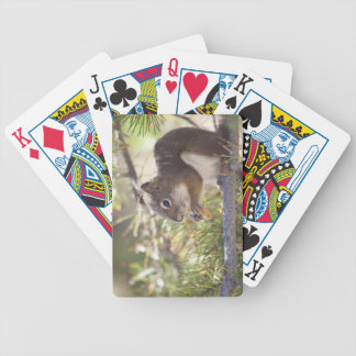 Squirrel eating a pine cone 2 poker deck