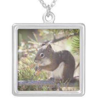 Squirrel eating a pine cone 2 silver plated necklace