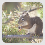 Squirrel eating a pine cone 2 square stickers