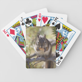 Squirrel eating a pine cone bicycle playing cards