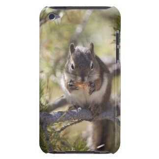Squirrel eating a pine cone barely there iPod covers