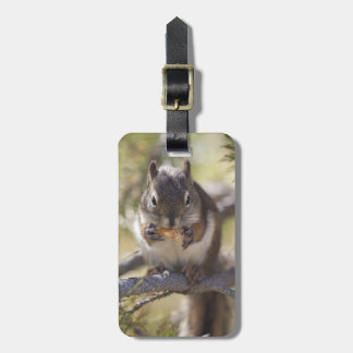 Squirrel eating a pine cone luggage tag