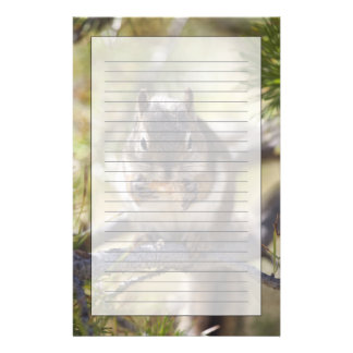 Squirrel eating a pine cone stationery