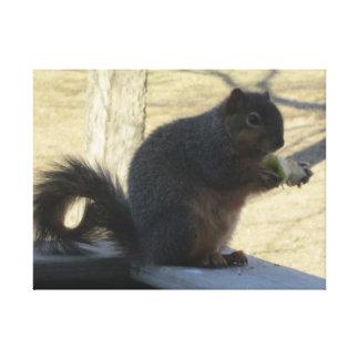 Squirrel Eating An Apple Canvas Print