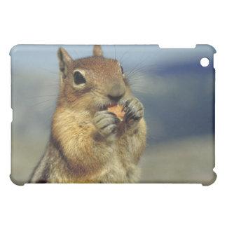 Squirrel eating iPad mini case