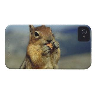 Squirrel eating iPhone 4 Case-Mate case
