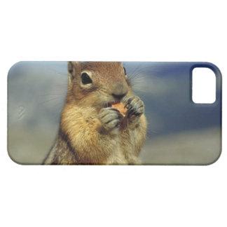 Squirrel eating iPhone 5 case