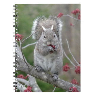 Squirrel eating notebooks