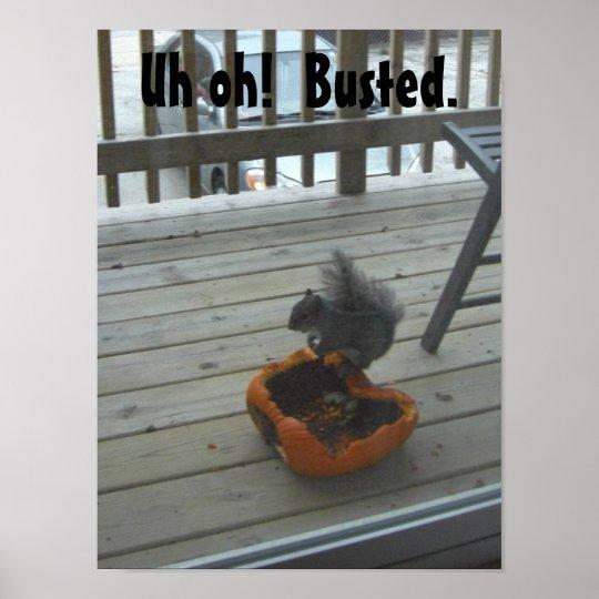 Squirrel eating pumpkin poster