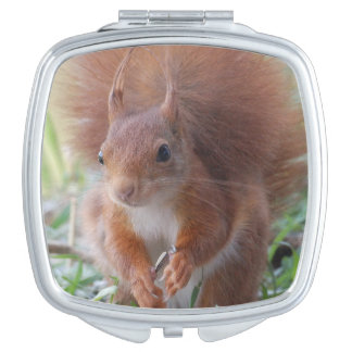 Squirrel ~ Écureuil ~ squirrels ~ by JL GLINEUR Compact Mirror