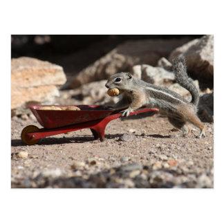 Squirrel Farmer Postcard