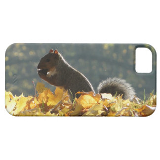 Squirrel Feeding iPhone 5 Covers