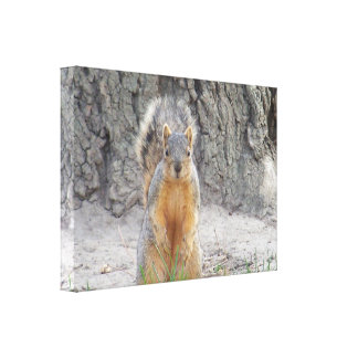 Squirrel! Gallery Wrapped Canvas