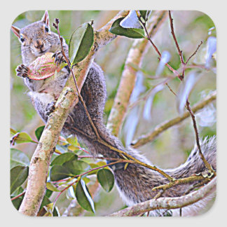 Squirrel Grey (Kentucky and North Carolina) Square Sticker