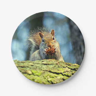 Squirrel (Grey) paper plate