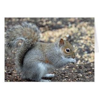 squirrel_ground010 card