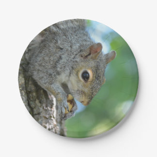 Squirrel Hanging in A Tree Paper Plate