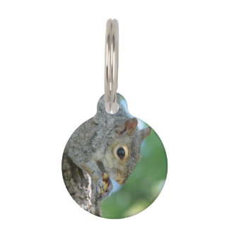 Squirrel Hanging in A Tree Pet Name Tag