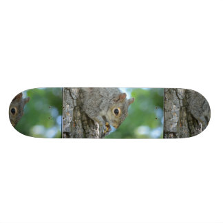 Squirrel Hanging in A Tree Skate Board Decks