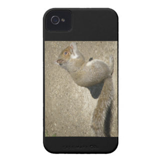 Squirrel Hungry Horatio Blackberry Bold Case