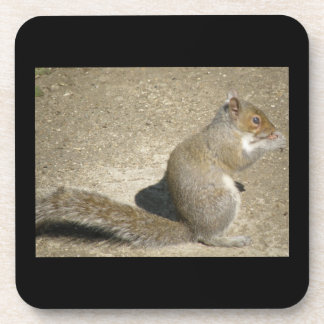 Squirrel Hungry Horatio Cork Coaster