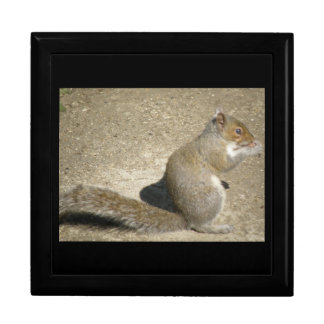 Squirrel Hungry Horatio Gift Box