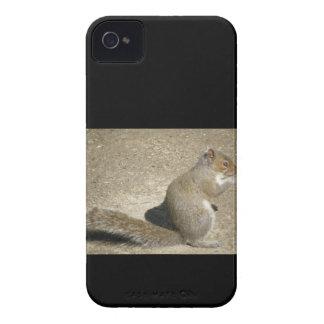 Squirrel Hungry Horatio iPhone 4 Case