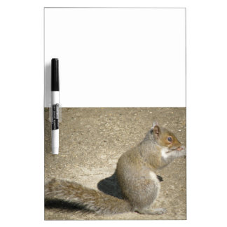 Squirrel Hungry Horatio Memo Board