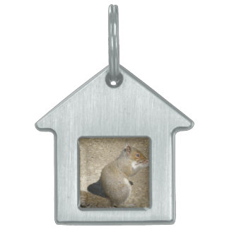 Squirrel Hungry Horatio Pet Tag