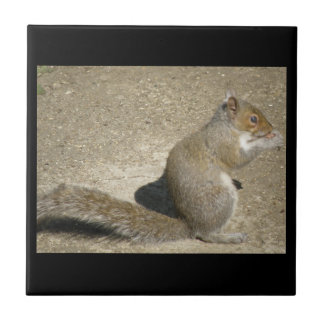 Squirrel Hungry Horatio Tile