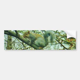 Squirrel in a Light Blue Mist Bumper Sticker