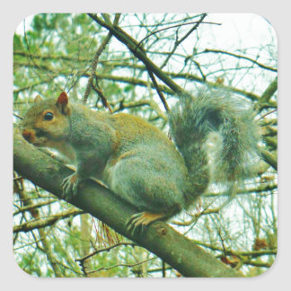 Squirrel in a Light Blue Mist Square Sticker