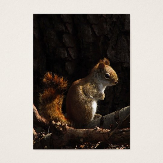 Squirrel in a Patch of Sunlight ATC Business Card