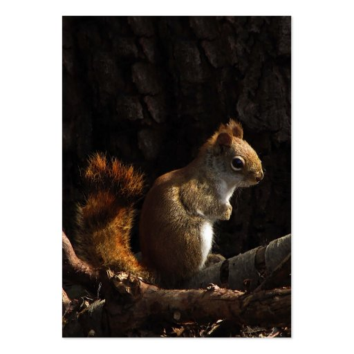 Squirrel in a Patch of Sunlight ATC Pack Of Chubby Business Cards