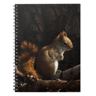 Squirrel in a Patch of Sunlight Notebooks