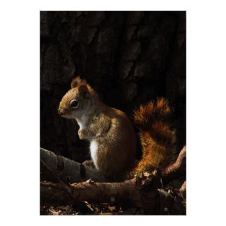 Squirrel in a Patch of Sunlight Poster