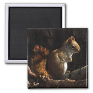 Squirrel in a Patch of Sunlight Square Magnet