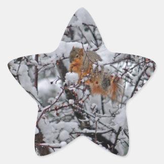 Squirrel in a Snowy Tree 6206 Star Sticker