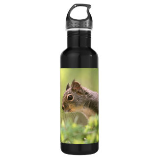 Squirrel in a Tree 710 Ml Water Bottle