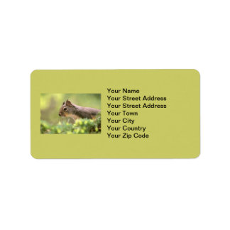 Squirrel in a Tree Address Label