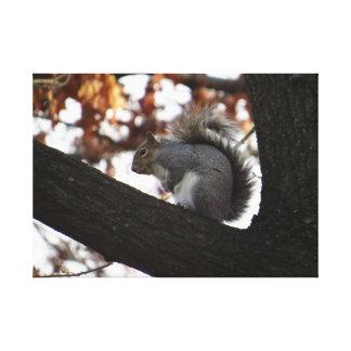 Squirrel in a Tree Gallery Wrap Canvas