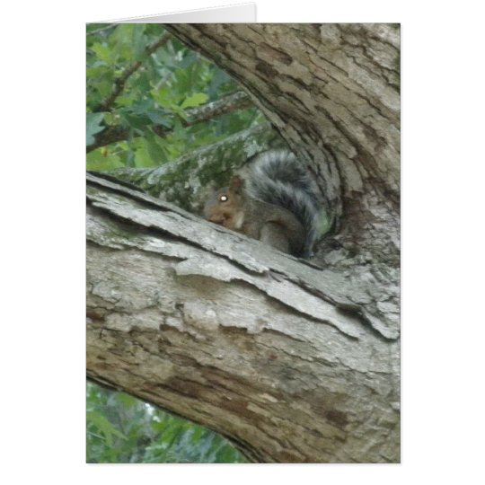 Squirrel In A Tree Card
