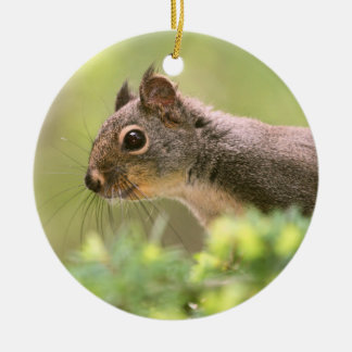 Squirrel in a Tree Christmas Tree Ornaments