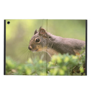 Squirrel in a Tree iPad Air Cases
